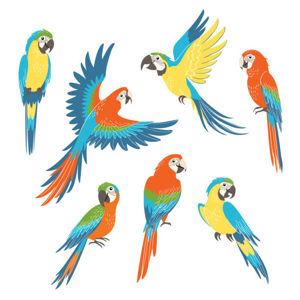 ilustrações de stock, clip art, desenhos animados e ícones de set of macaw parrots - arara
