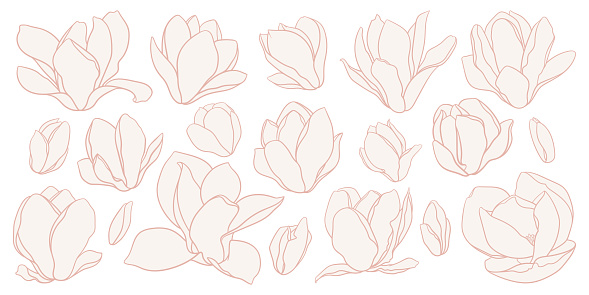 Set of magnolia flowers, line drawing with fill in beige colors.