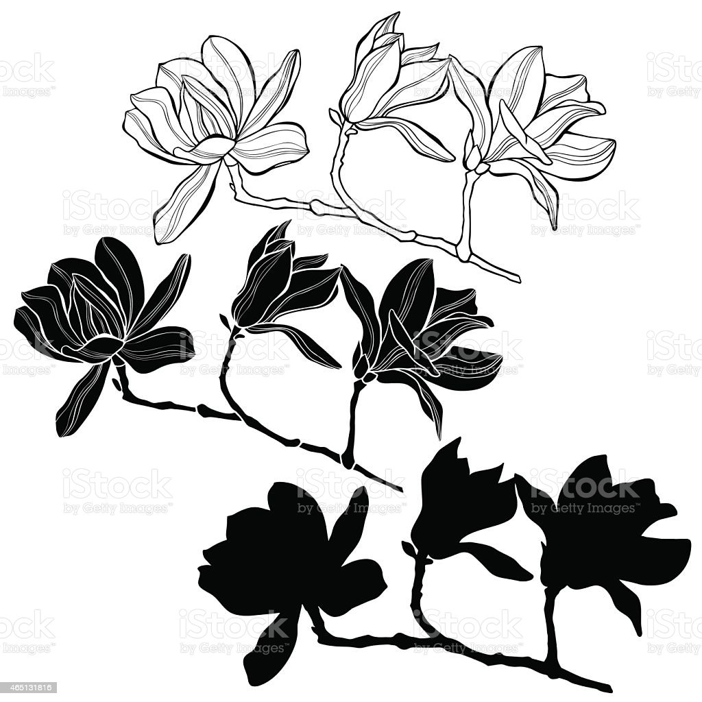Set of magnolia isolated on white background. vector art illustration