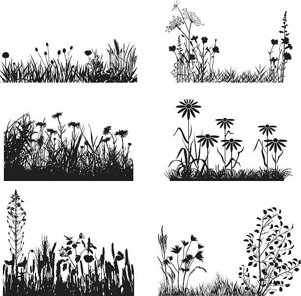 illustrations, cliparts, dessins animés et icônes de ensemble de plantes de meadow - plante sauvage