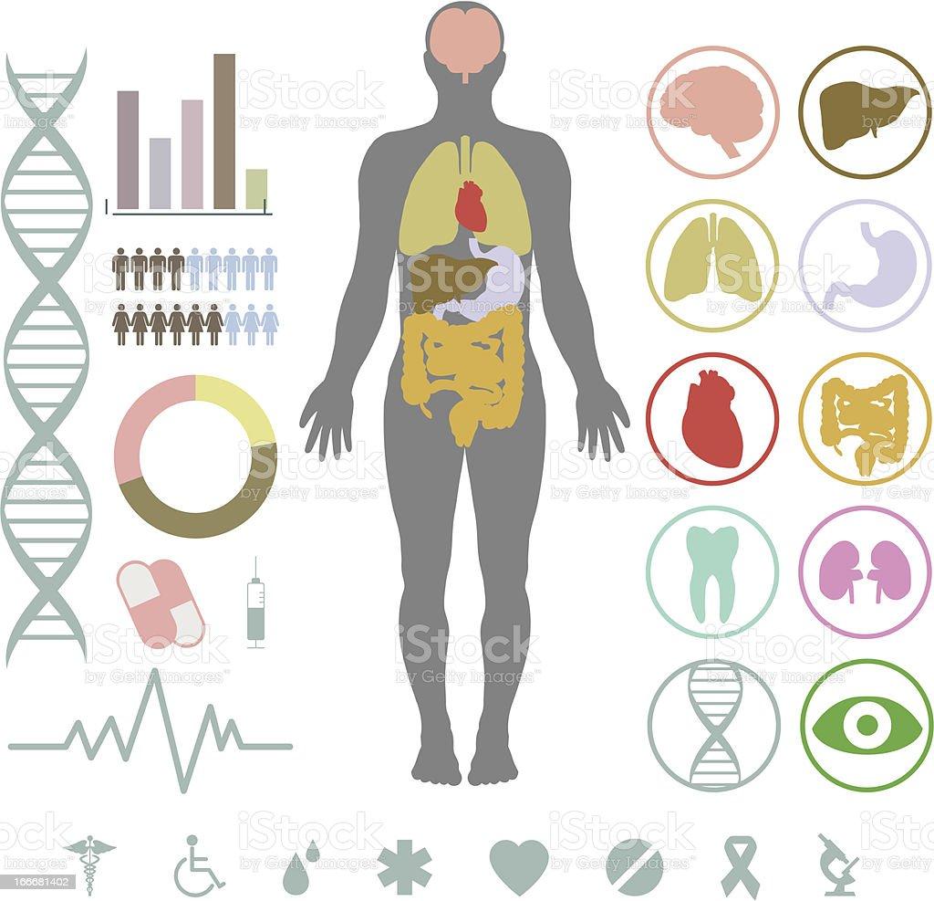 Set of medical inforgraphic elements vector art illustration