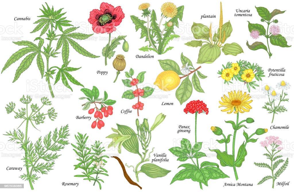 Set of medical plants - Royalty-free Alternative Lifestyle stock vector