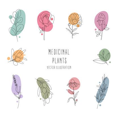 Set of medicinal plants.Line art.Contour