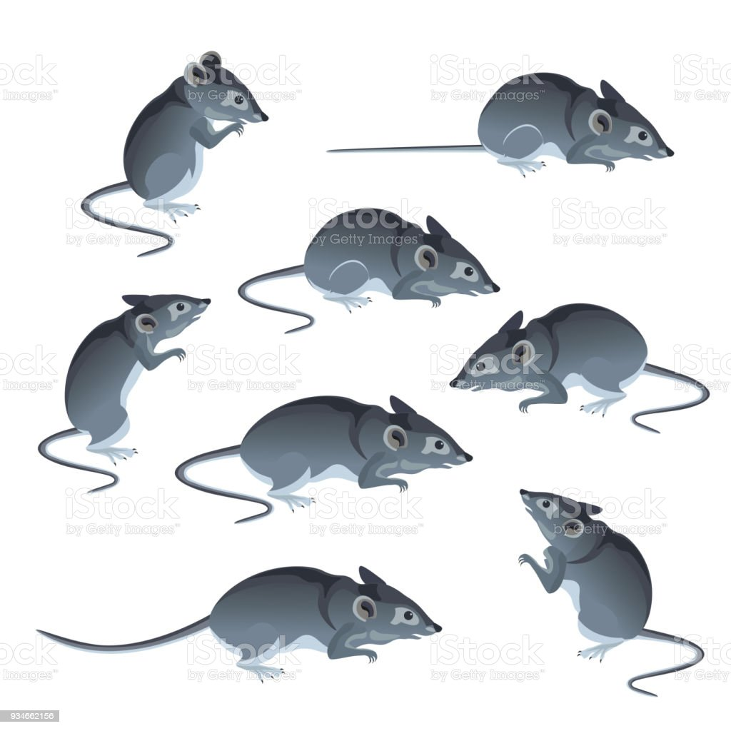 Set of mice vector vector art illustration