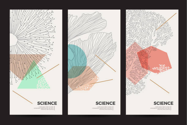 A set of minimalistic templates with natural elements for packaging and decoration of cosmetic products, beauty salons and spa. Graphic linear illustration of corals, algae and jellyfish. marine life stock illustrations