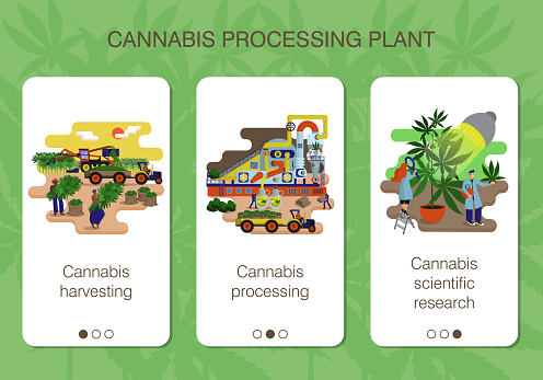 Set of mobile app pages of hemp processing plant about cannabis harvesting, processing and scientific recearch
