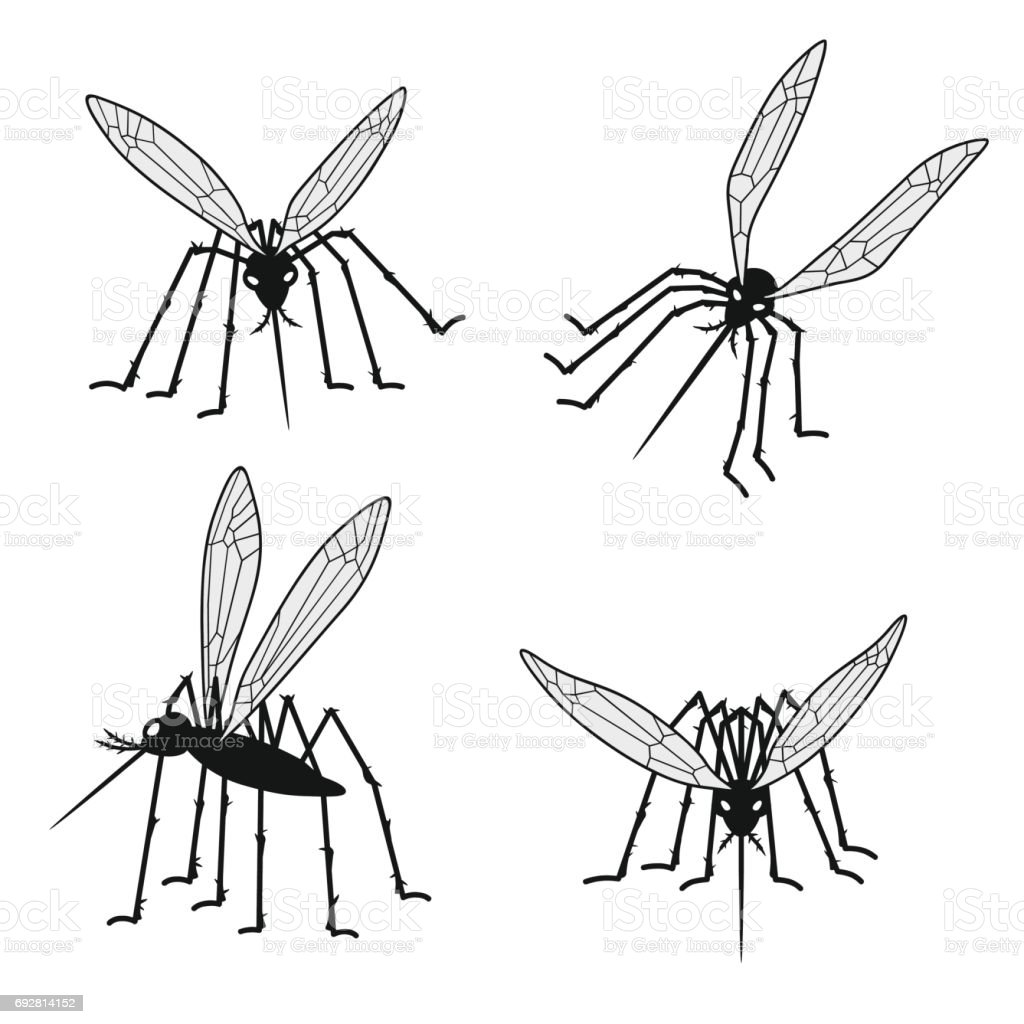 Set of mosquito silhouettes isolated on white background. Vector vector art illustration