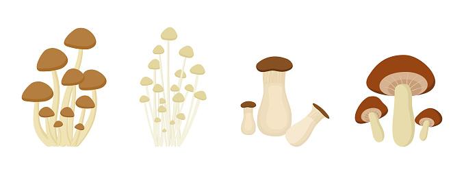 set of Mushroom on white background.