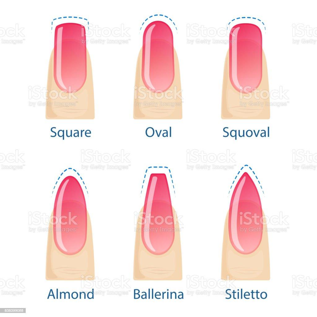 Set of nails shapes vector art illustration