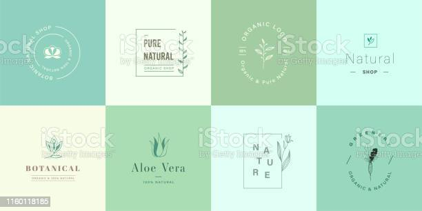 Set of natural and organic logo natural logo for branding corporate vector id1160118185?b=1&k=6&m=1160118185&s=612x612&h=rdltgy3rdyi6p o3kc 3k3ga6cujhqalsrwzdrpwnve=
