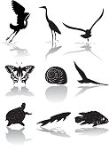 Set of Nine Wetlands Wildlife icons in Black and White