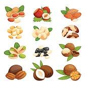 Set of nuts vector illustration.