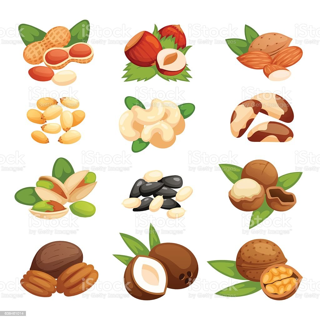 Set of nuts vector illustration. vector art illustration