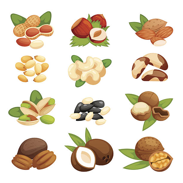 illustrations, cliparts, dessins animés et icônes de set of nuts vector illustration. - aliments crus