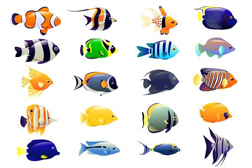 Set of ocean fish. Cartoon background of underwater animals and with exotic tropical fish. Ocean fish, animal nature cartoon, wildlife aquarium, sea fish. Vector illustration