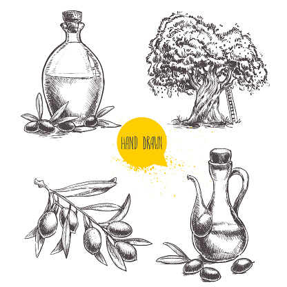 Set of olive branch with olives, bottles and  tree.