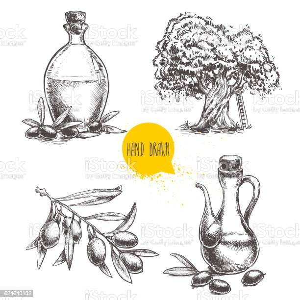 Set of olive branch with olives bottles and tree vector id624643132?b=1&k=6&m=624643132&s=612x612&h=mcbdd3iojejwwrm qrum4tykgh1imnkv 0cqrohsq3g=
