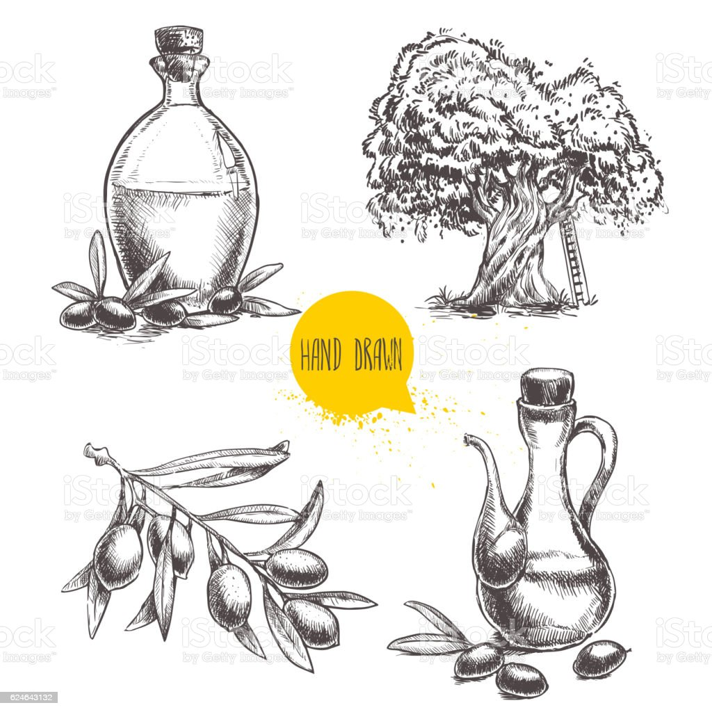 Set of olive branch with olives, bottles and  tree. - ilustração de arte vetorial