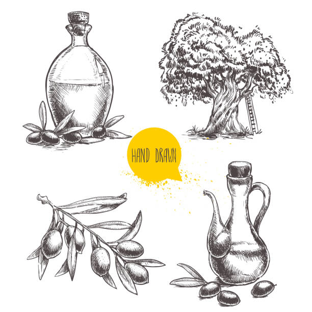 illustrations, cliparts, dessins animés et icônes de set of olive branch with olives, bottles and  tree. - olivier