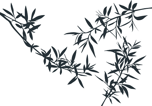 Set of Olive Tree Branches Shapes. Vector Silhouette of Bamboo Rainforest