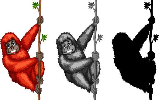 Set of orangutan character