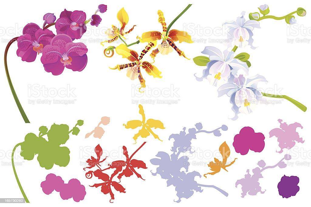 Set of Orchids vector art illustration