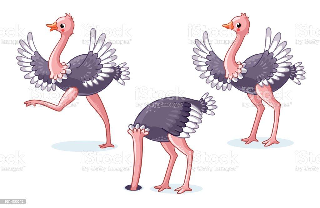 Conjunto de avestruzes em poses diferentes. - ilustração de arte em vetor