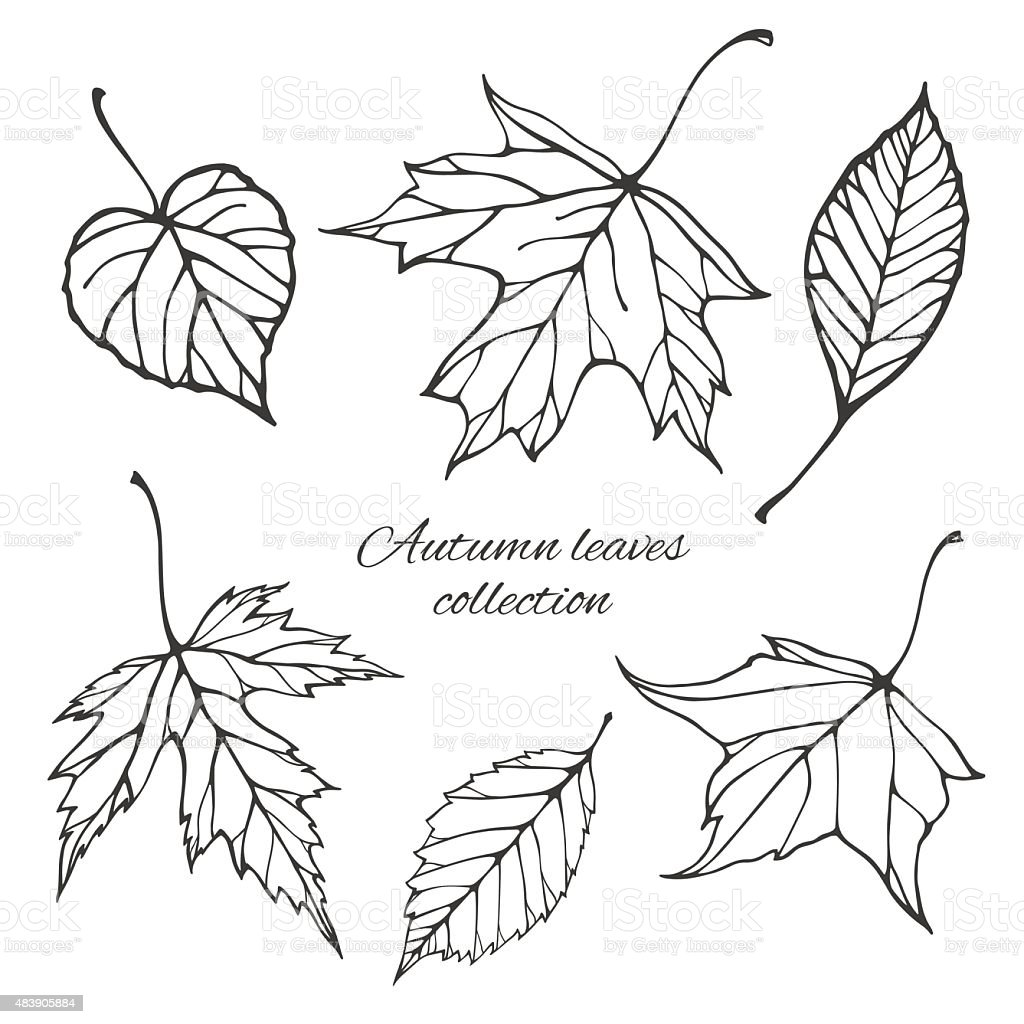 Set Of Outline Autumn Leaves Stock Illustration Download Image Now Istock