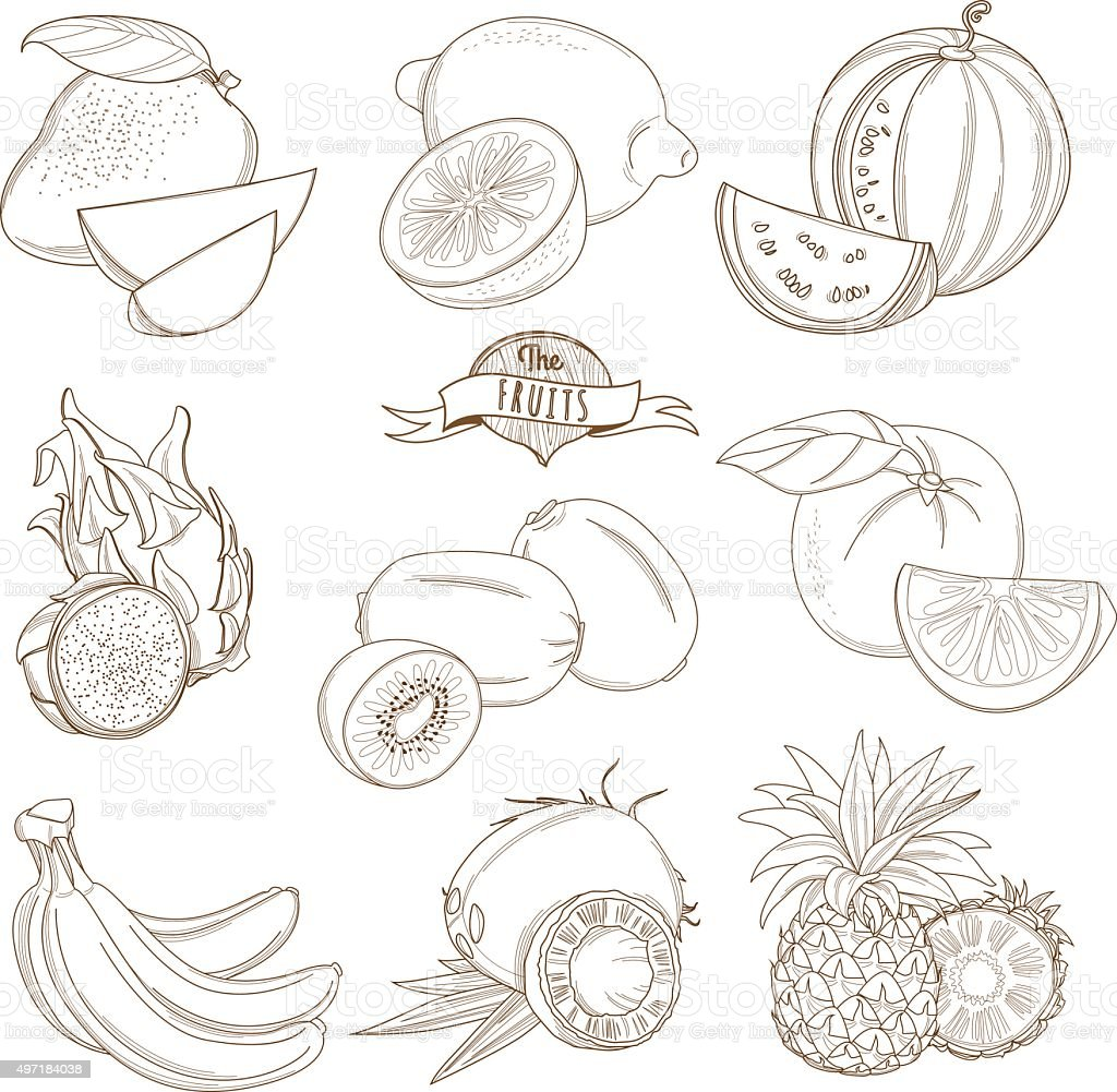 Set of Outline hand drawn fruits with leaves vector art illustration