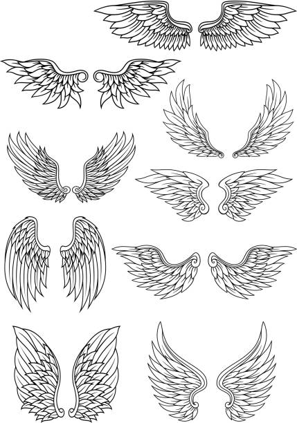 illustrations, cliparts, dessins animés et icônes de ensemble d'ailes de contour à blasons - tatouages d'anges