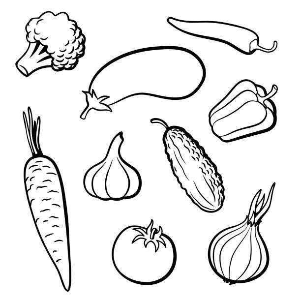 illustrazioni stock, clip art, cartoni animati e icone di tendenza di set of outline vector vegetables - aglio cipolla isolated