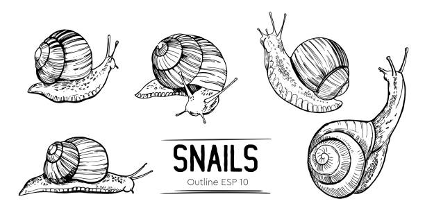 set of outlines snails. hand drawn illustration converted to vector - snail stock illustrations