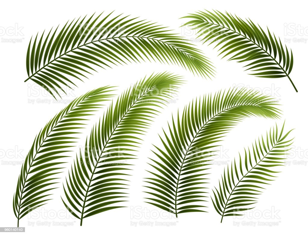 Set of Palm Branches royalty-free set of palm branches stock illustration - download image now