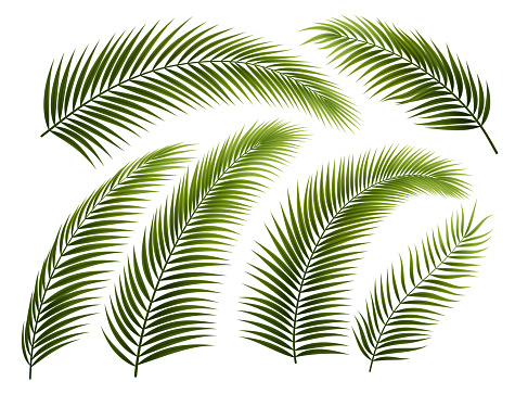 Set of Palm Branches