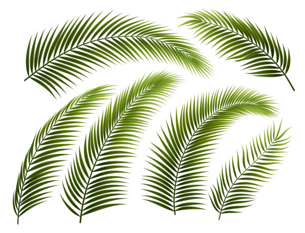 set of palm branches - palm leaf stock illustrations, clip art, cartoons, & icons