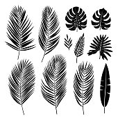 Set of palm leaves. Black silhouette of tropical plants. Vector collection.