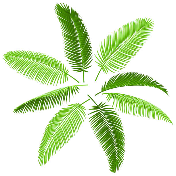 set of palm leaves - palm leaf stock illustrations, clip art, cartoons, & icons