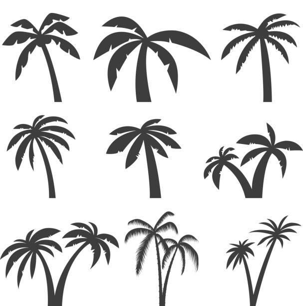 ilustrações, clipart, desenhos animados e ícones de conjunto de ícones de árvore de palma isolado no fundo branco. elementos de design para o rótulo, emblema, sinal, menu. ilustração em vetor. - coqueiro