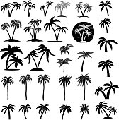 Set of palm tree illustrations. Design element for  label, emblem, sign, poster, card, banner.