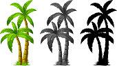 Set of palm tree illustration