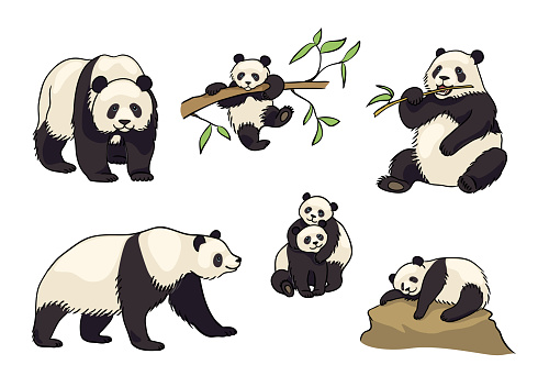 Set of Pandas - vector illustration