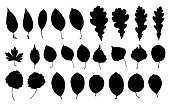 Set of park leaf silhouettes. Black prints isolated on white background. Autumn leaf fall, eco design.