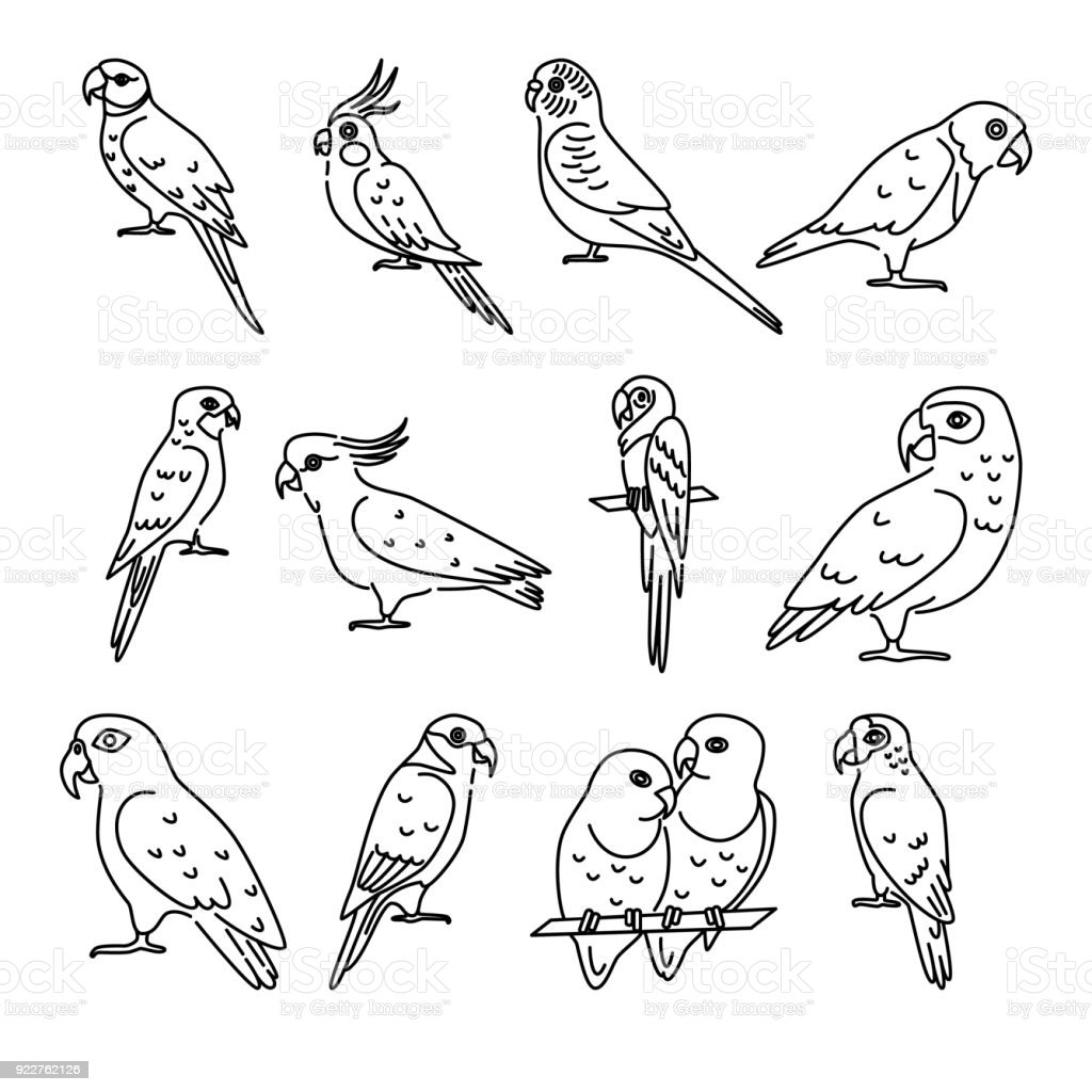Set of parrot icons in thin line style vector art illustration