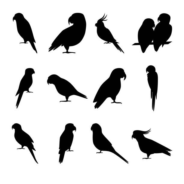 ilustrações de stock, clip art, desenhos animados e ícones de set of parrot silhouette icons in flat style - arara
