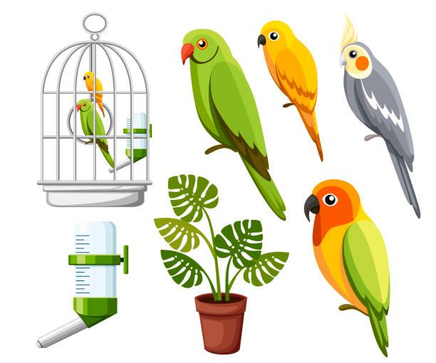 stockillustraties, clipart, cartoons en iconen met set van papegaaien. kooi met vogels, water drinker en bloempot. cartoon stijl iconen. platte vectorillustratie geïsoleerd op witte achtergrond - kooi