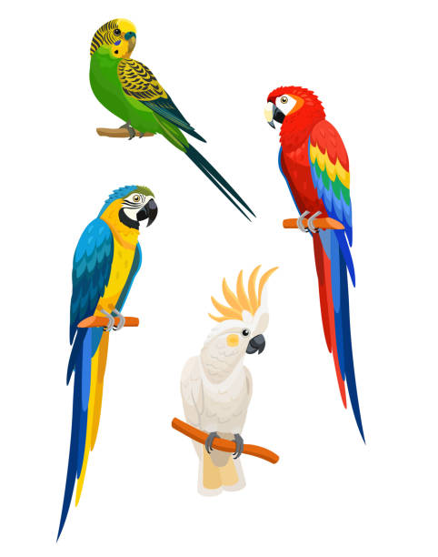 ilustrações de stock, clip art, desenhos animados e ícones de set of parrots isolated on white background. vector illustration. - arara