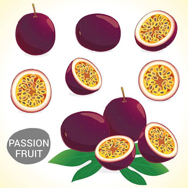 illustrations, cliparts, dessins animés et icônes de jeu de fruit de la passion (fruit de la passion) dans différents styles format vectoriel - fruit de la passion