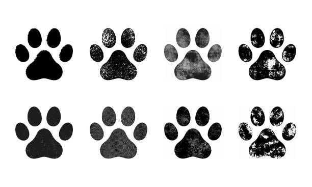stockillustraties, clipart, cartoons en iconen met set van paw print. vector illustratie - honden