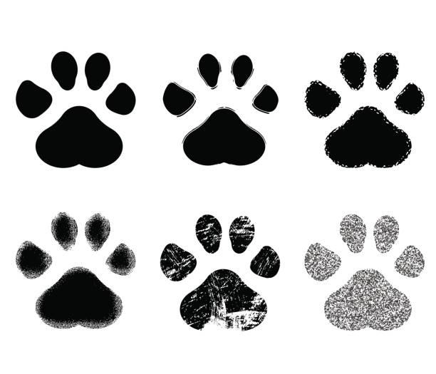 set of paw print. vector illustration. - cat stock illustrations, clip art, cartoons, & icons