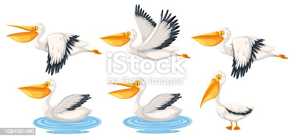 Set of pelican character illustration